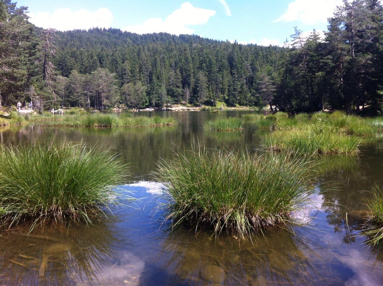 Grasbüschel im Wasser mit Bergen und Bäumen im Hintergrund