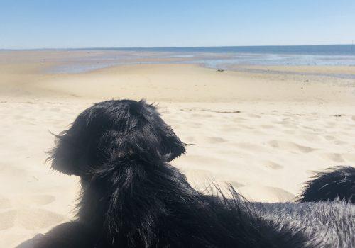 süßer schwarzer Hund am Strand schaut aufs Wasser