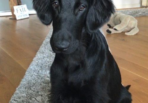 süßer schwarzer Hund